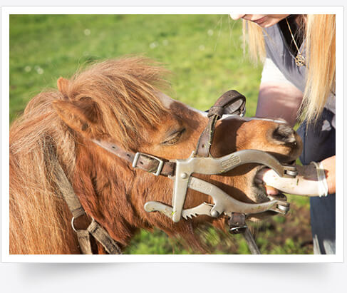 Certified Equine Dental Services