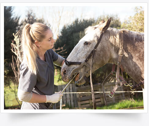 Certified Equine Dentist